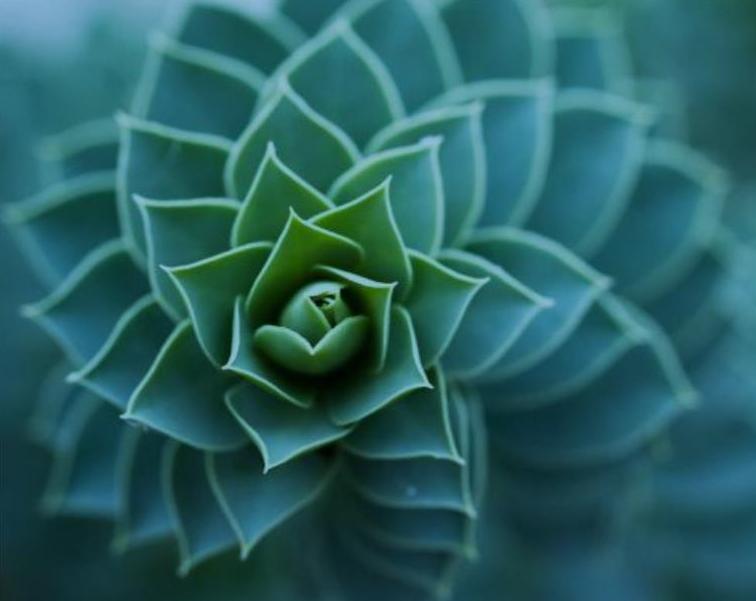 Biomimètica Una nova oportunitat de relacionar-se amb la natura