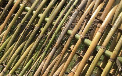 Taller Entramats Vegetals. Un recurs natural estructural. (5a Edició)